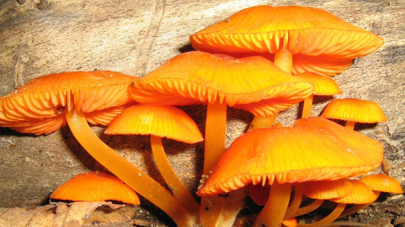 What Are Some Examples of Decomposers?