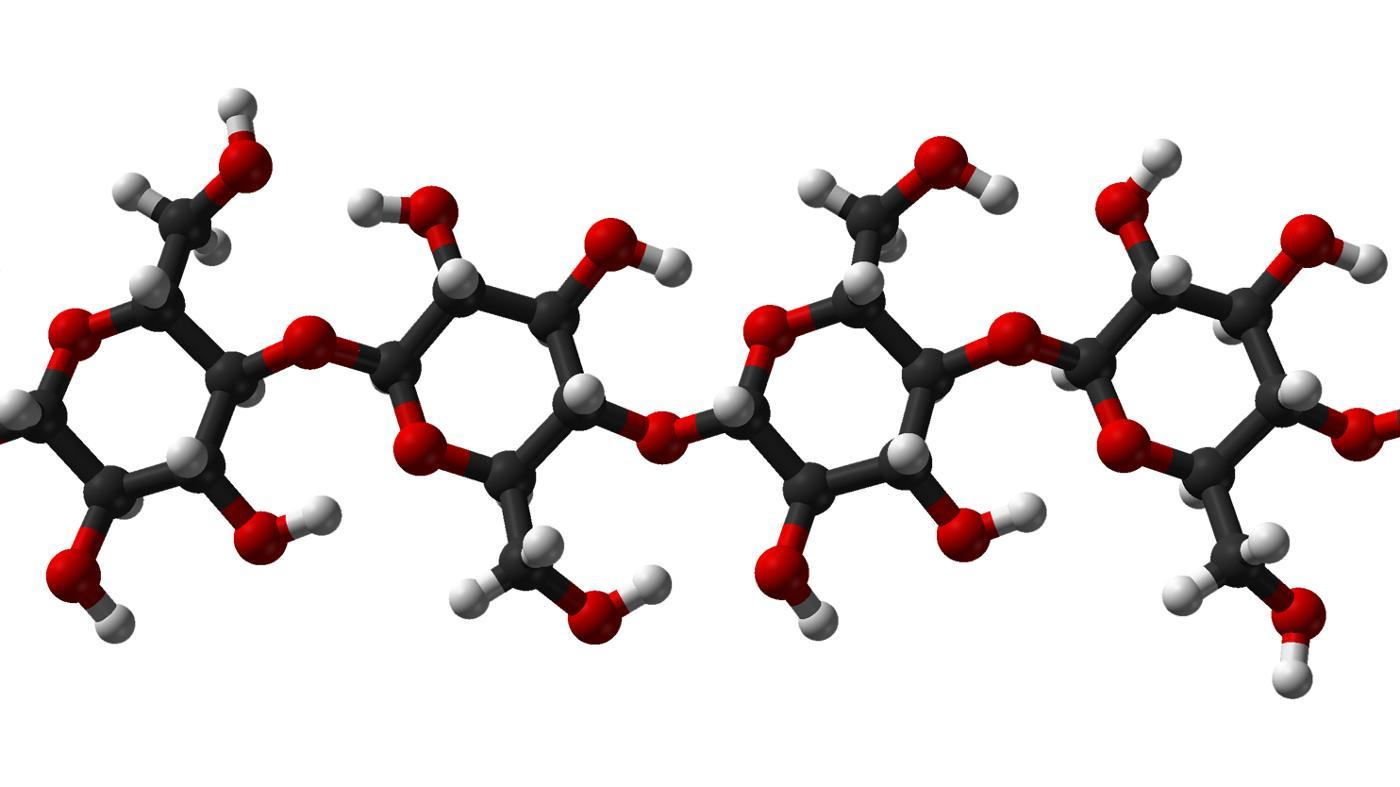 What Are Some Examples of Polysaccharides?
