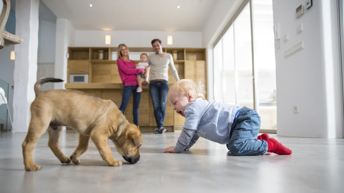 What Are Some Family-Friendly Dog Breeds?