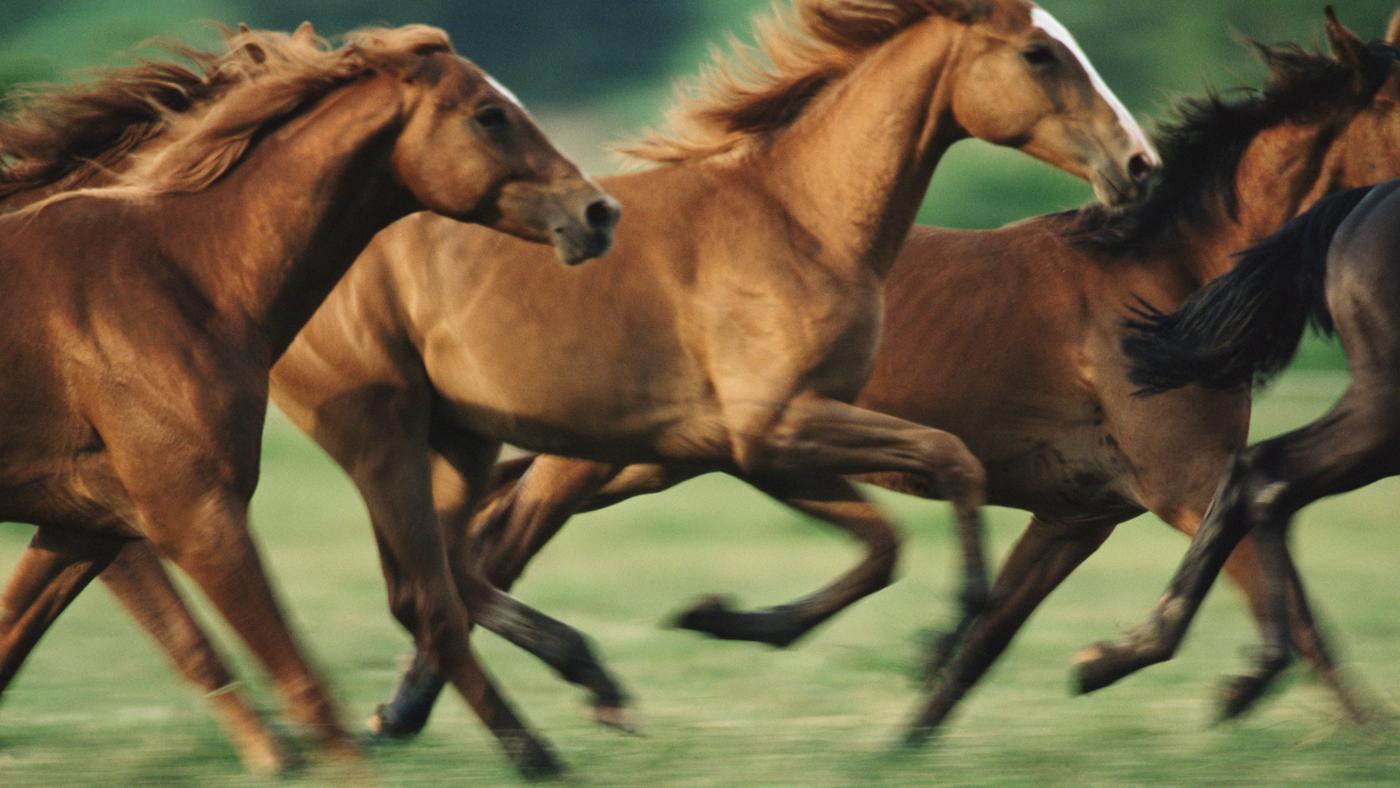 How Fast Can Horses Run?