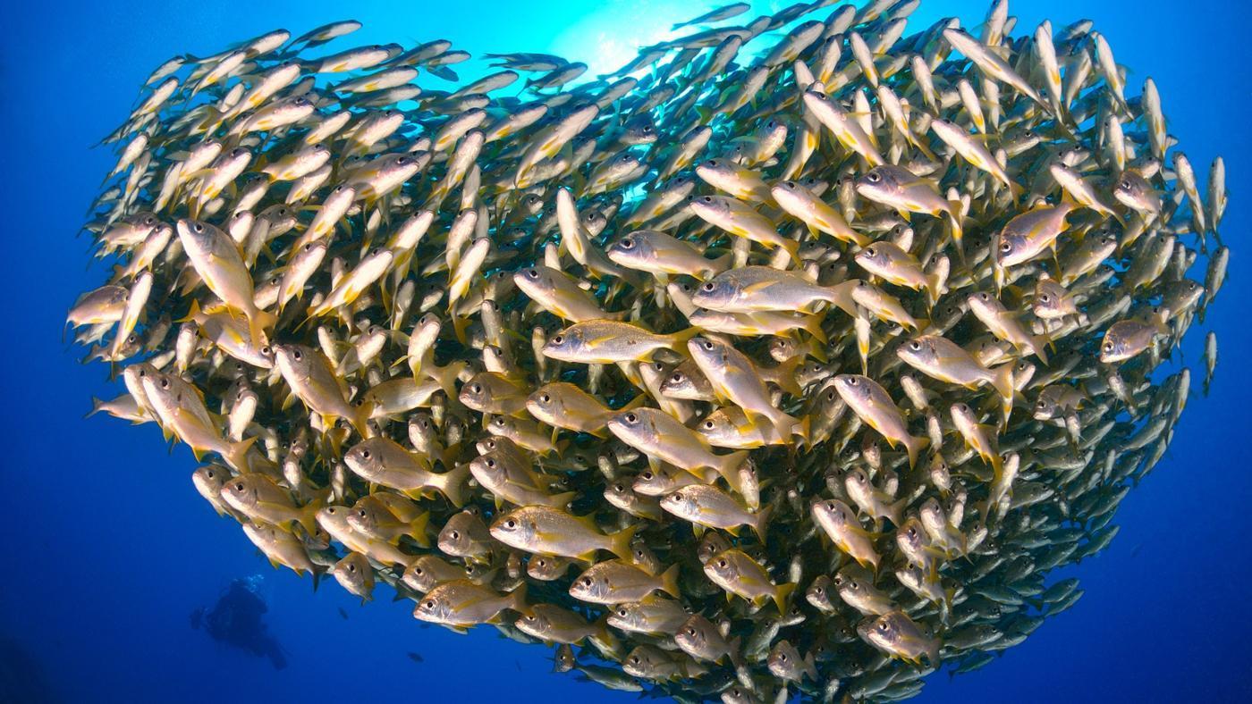 Do Fish Have Hearts?
