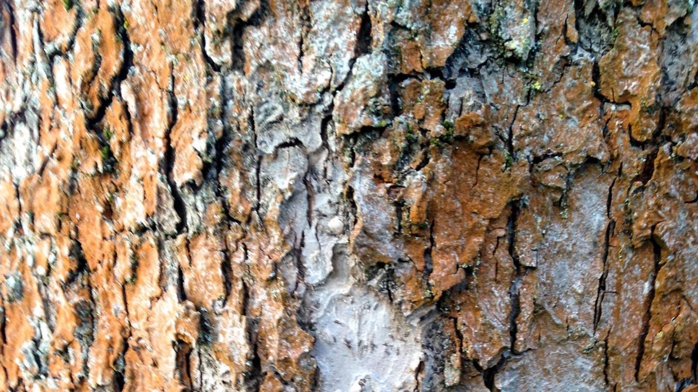 How Do You Fix a Tree With Bark Missing?