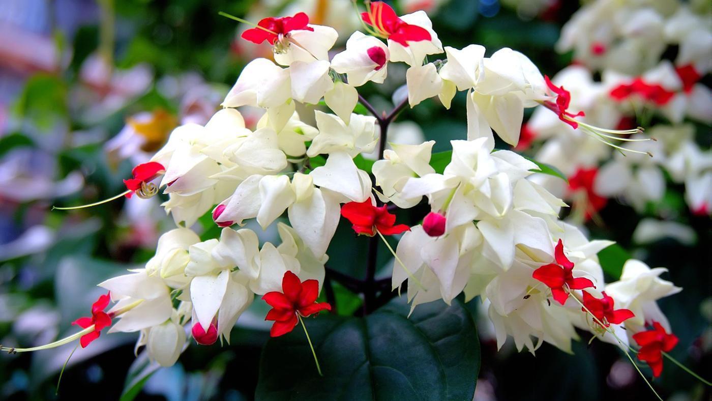 What Flowers Bloom in June?