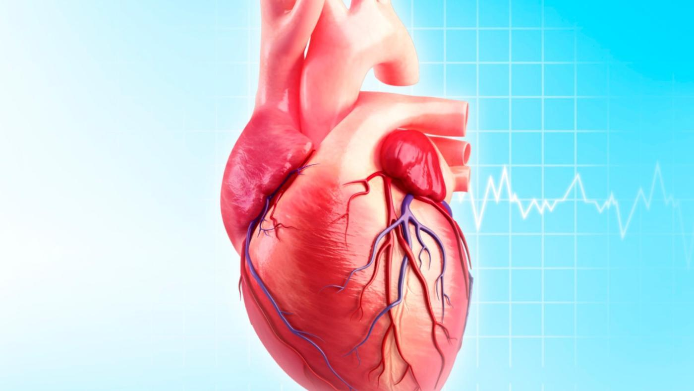 What Is the Function of the Circumflex Artery?