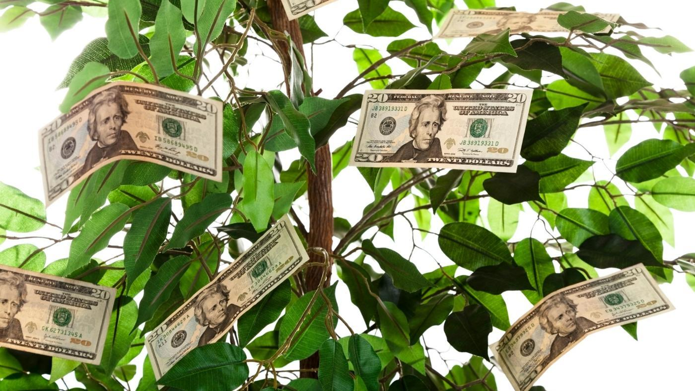How Do You Give a Money Tree As a Gift?