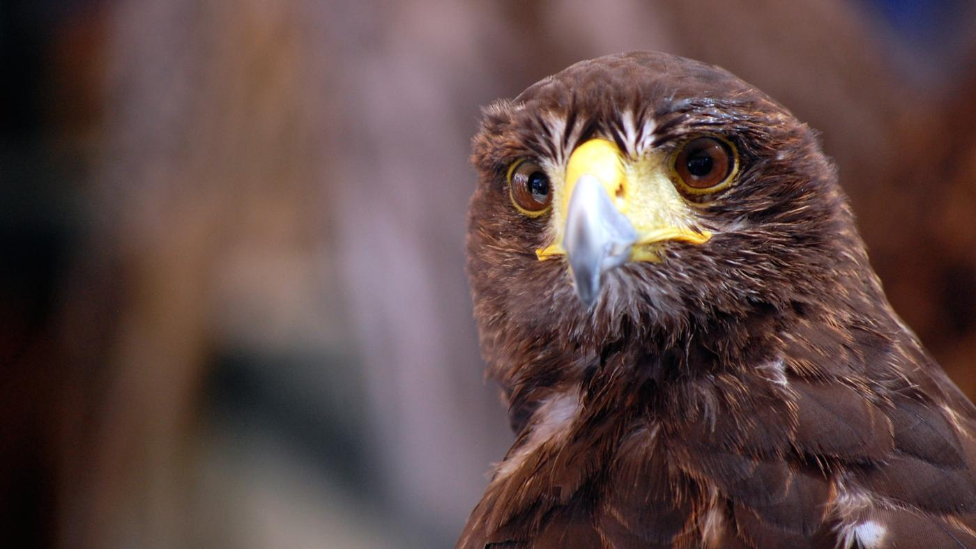 How Good Is a Hawk's Vision?