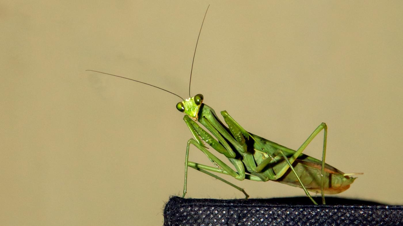 What Are Some of the Characteristics of Grasshoppers?