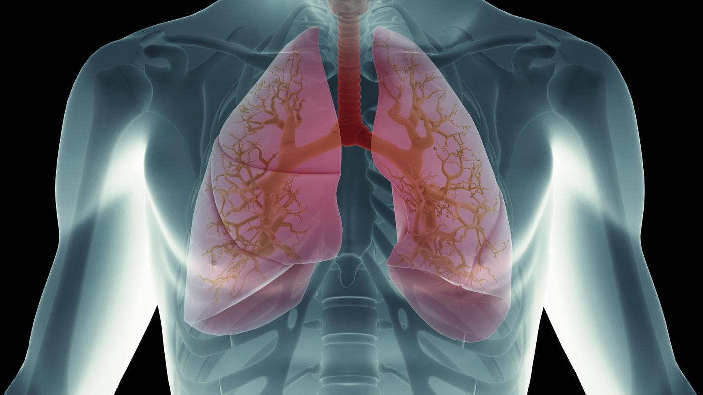 What Happens When Blood Reaches the Lungs?