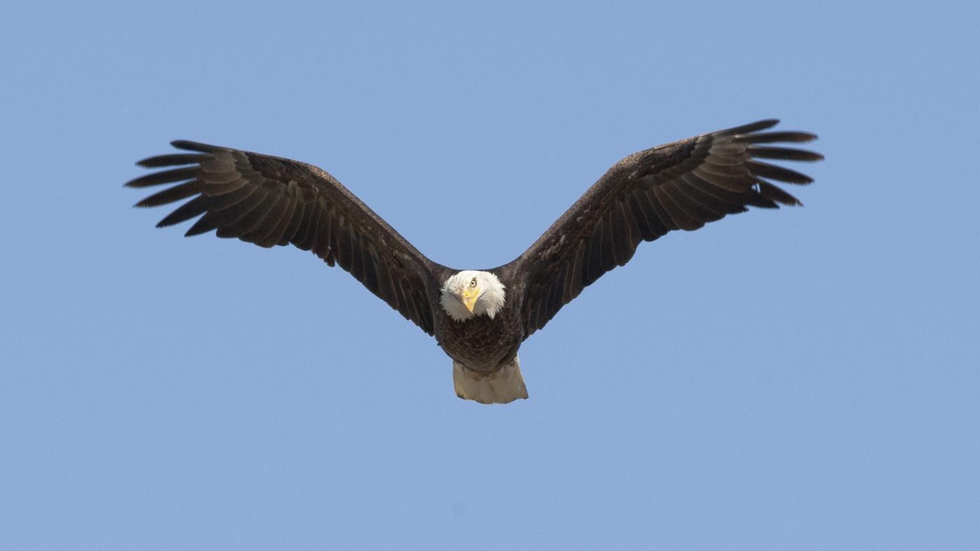 How High Can an Eagle Fly?