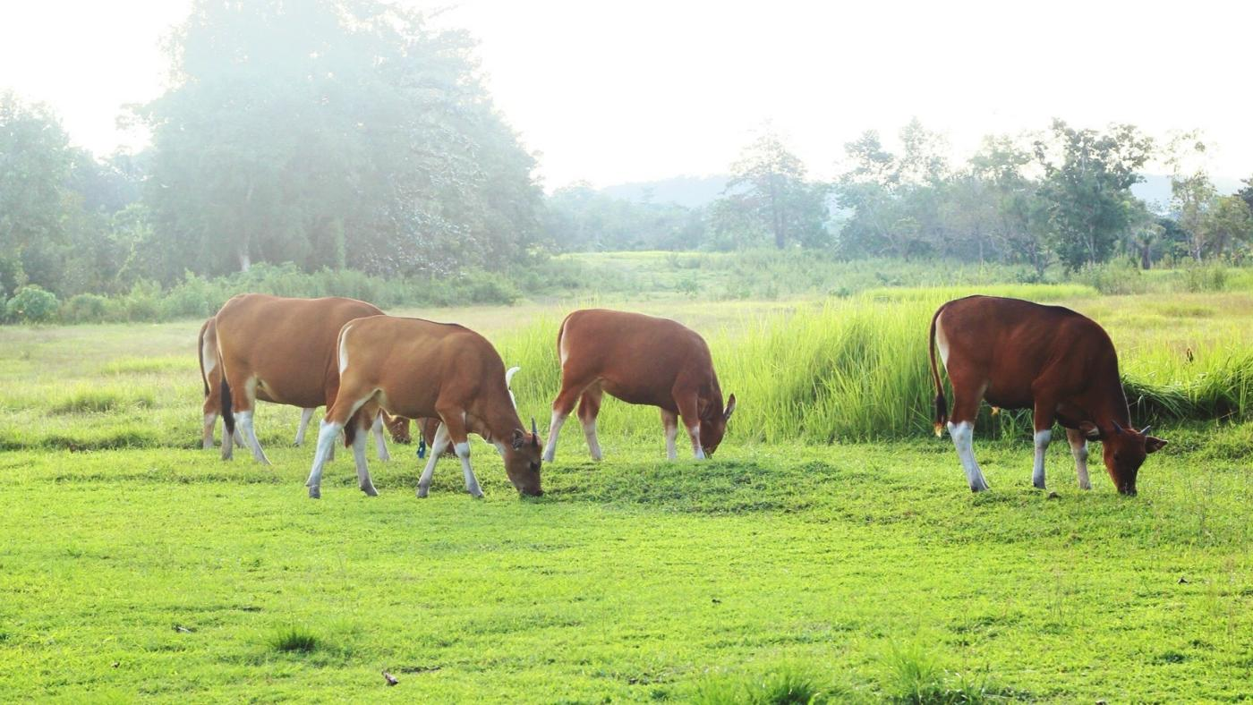 What Is Hoof-and-Mouth Disease?