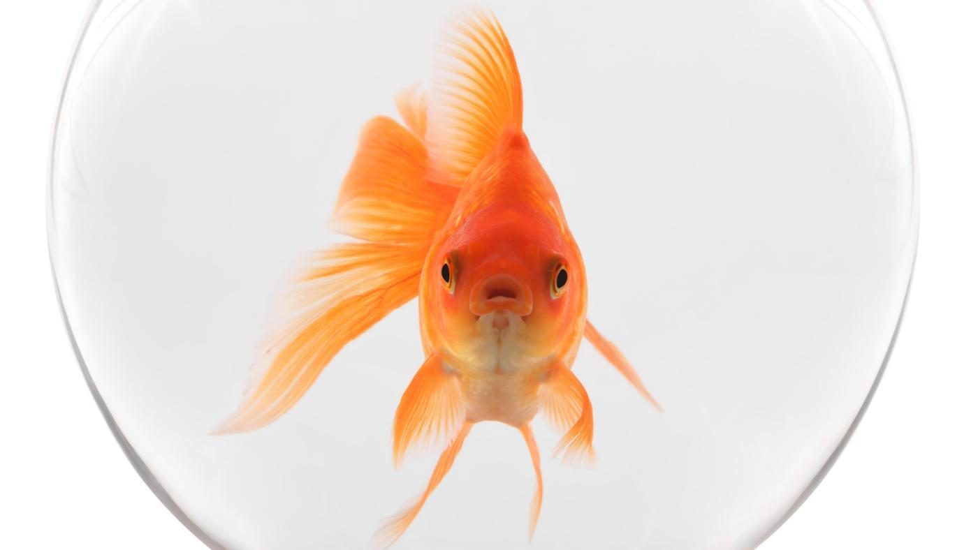 How Can You Tell If a Fish Is Dying?