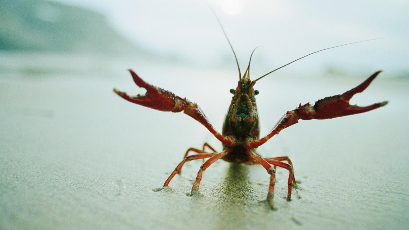 How Do Crayfish Protect Themselves?