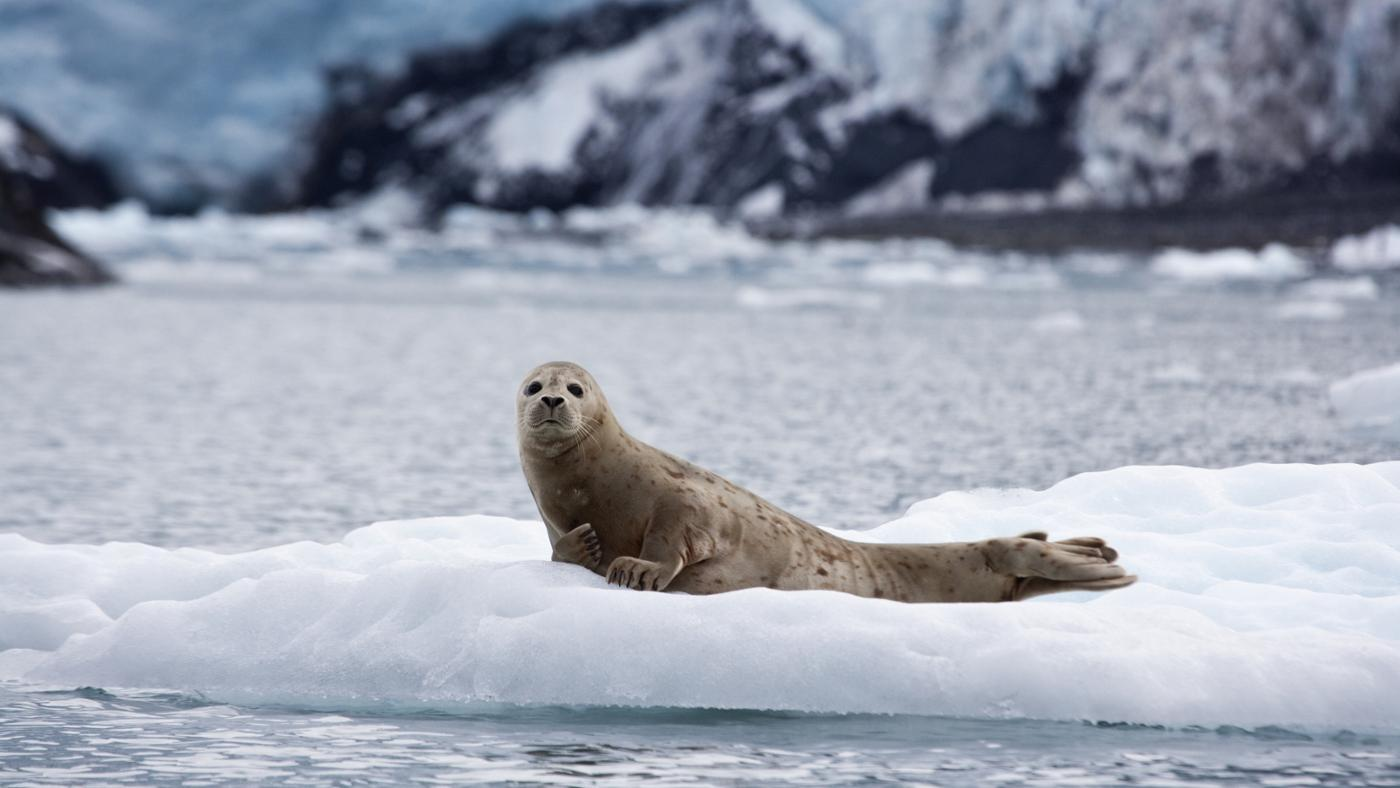 How Do Harbor Seals Protect Themselves?