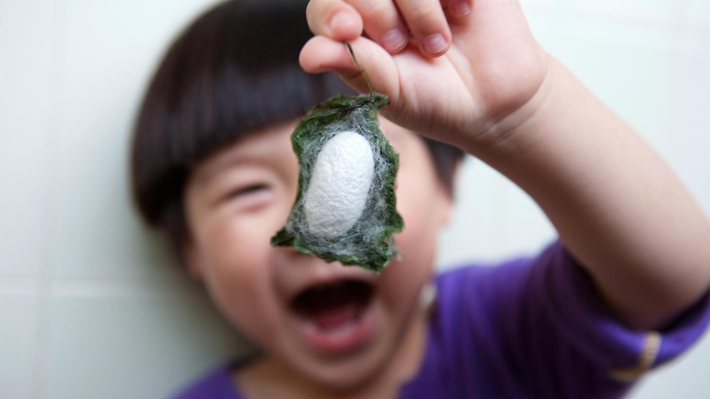 How Do Silkworms Make Silk?