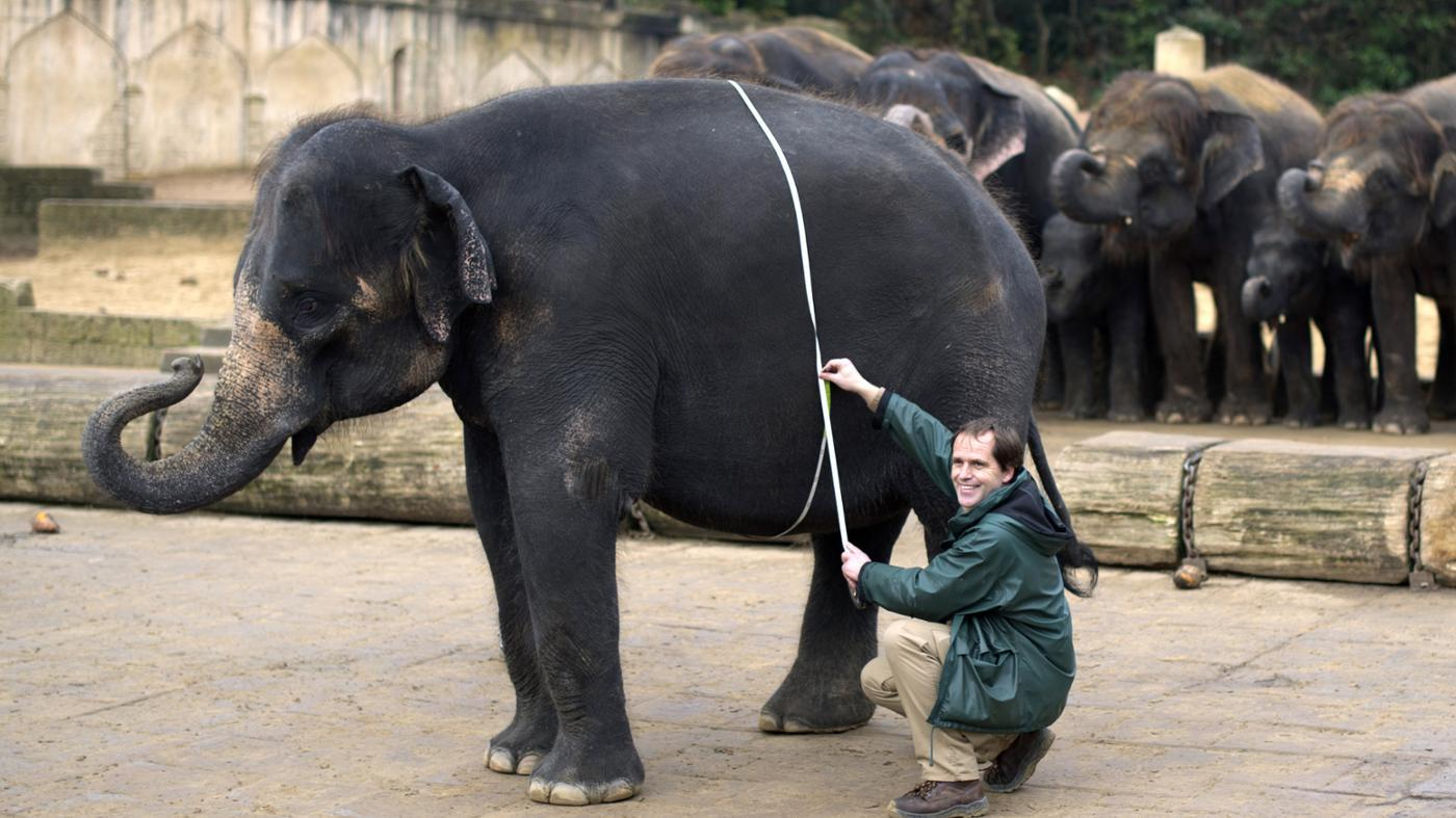 How Much Do Elephants Weigh in Tons?