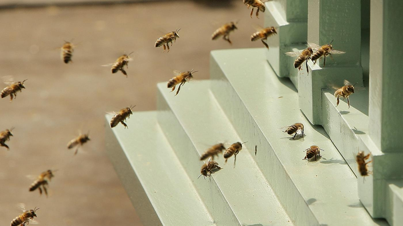 How Do You Kill Bumblebees?