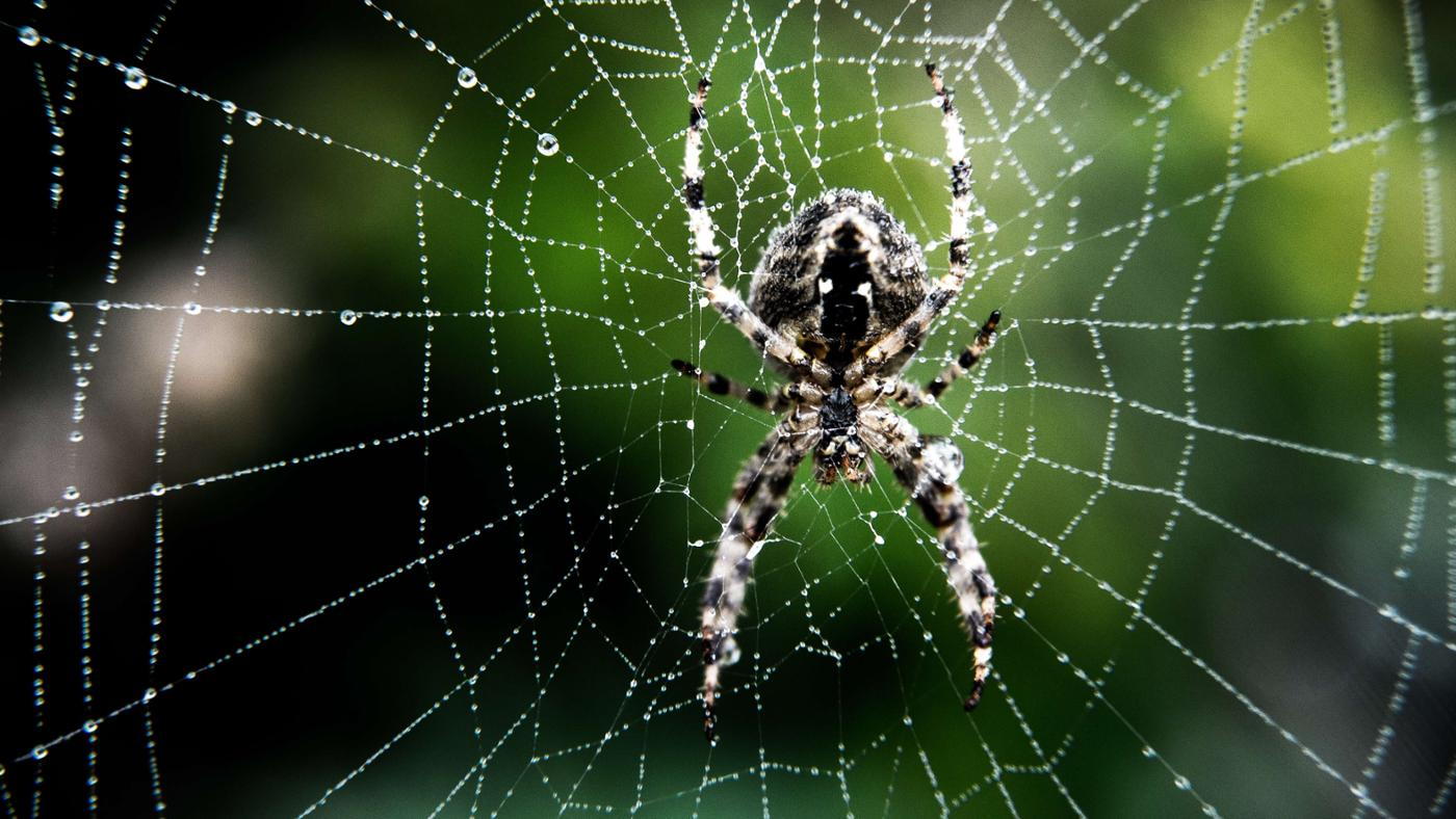 How Do You Identify a Spider?