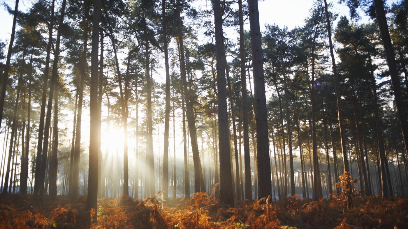 What Are Some Interesting Facts About Forests for Kids?