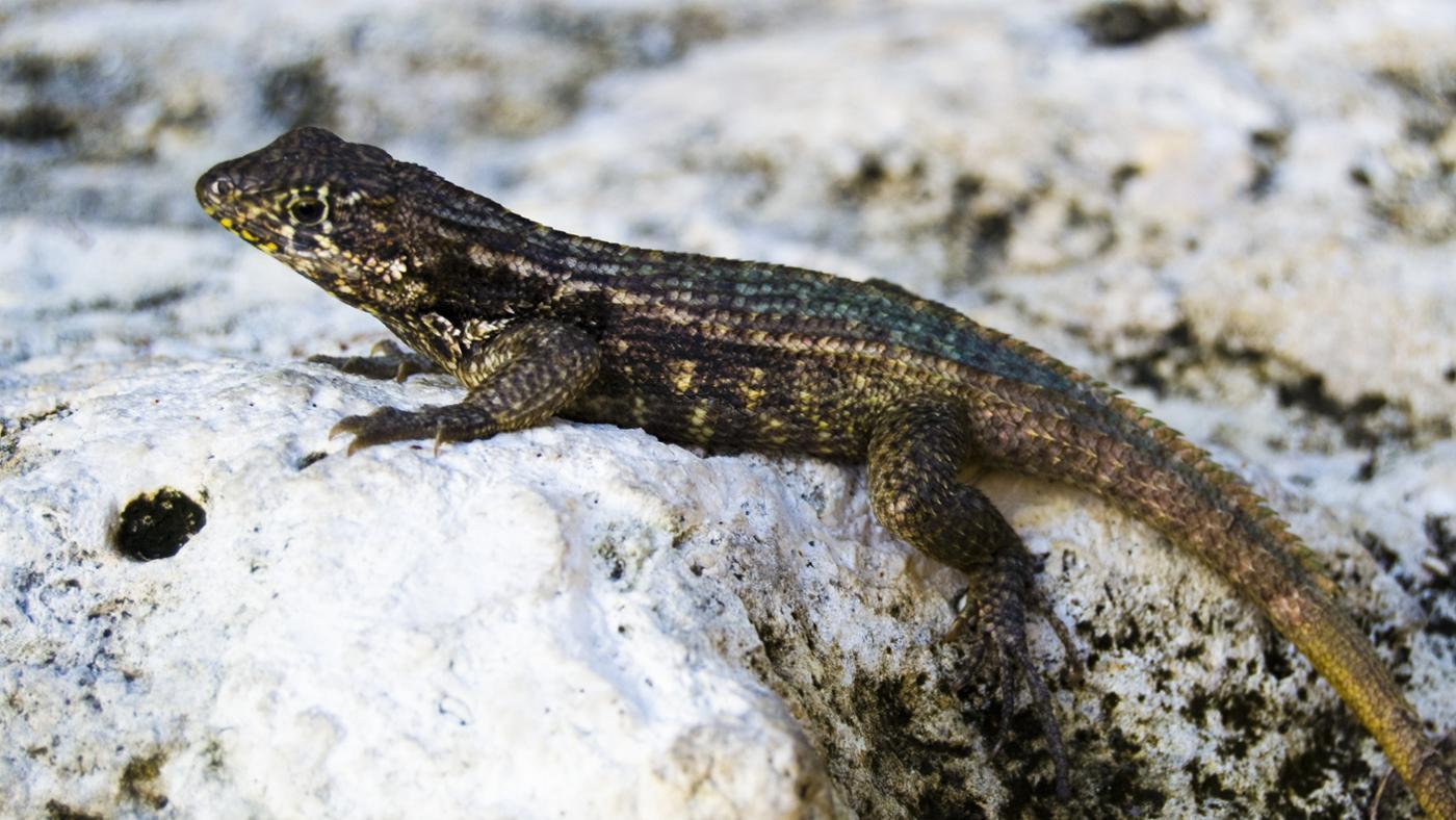 Where Do Lizards Go in the Winter?