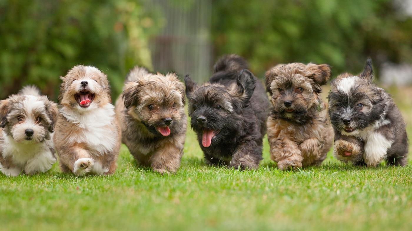 How Do You Find Local Puppies for Adoption?