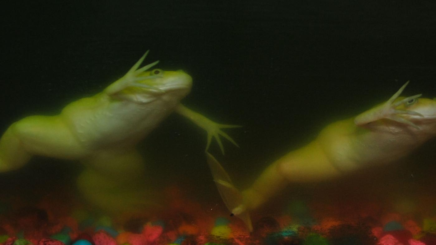 How Long Can Frogs Hold Their Breath Underwater?