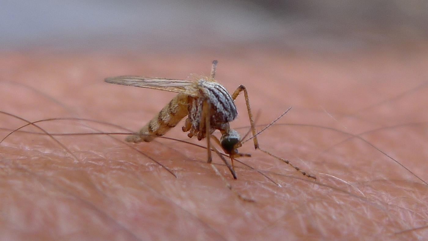 How Long Do Mosquitoes Live Indoors?