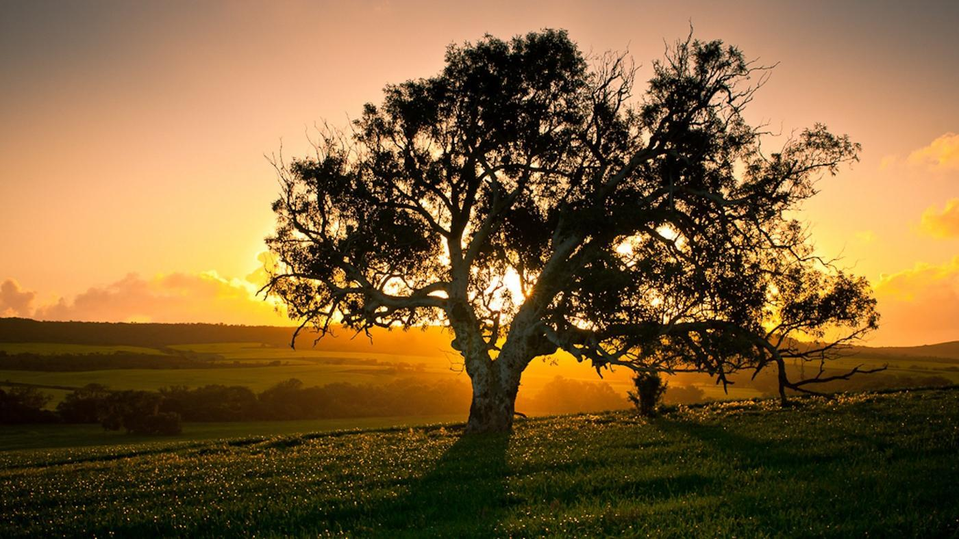 How Long Does It Take a Tree to Fully Grow?