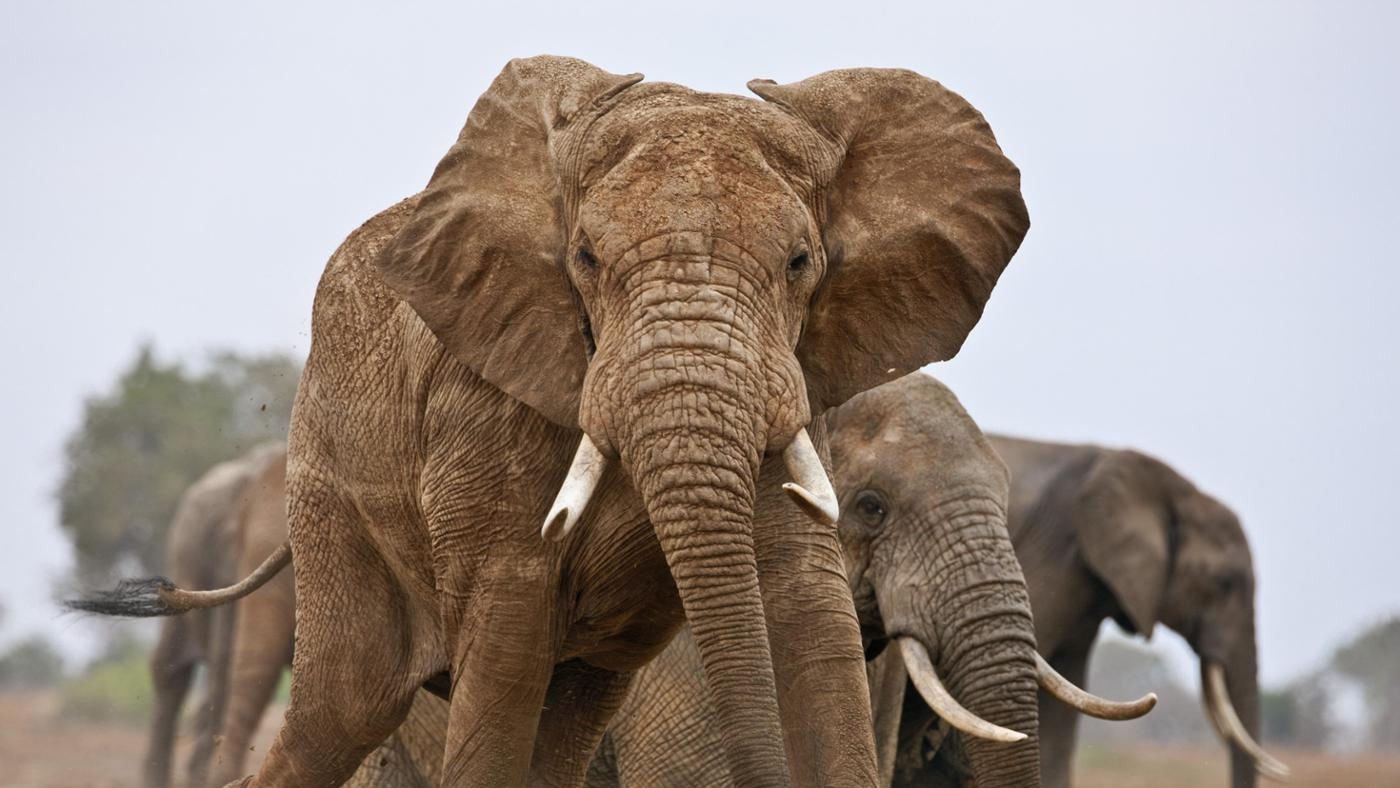 How Many Elephants Are There in the World?