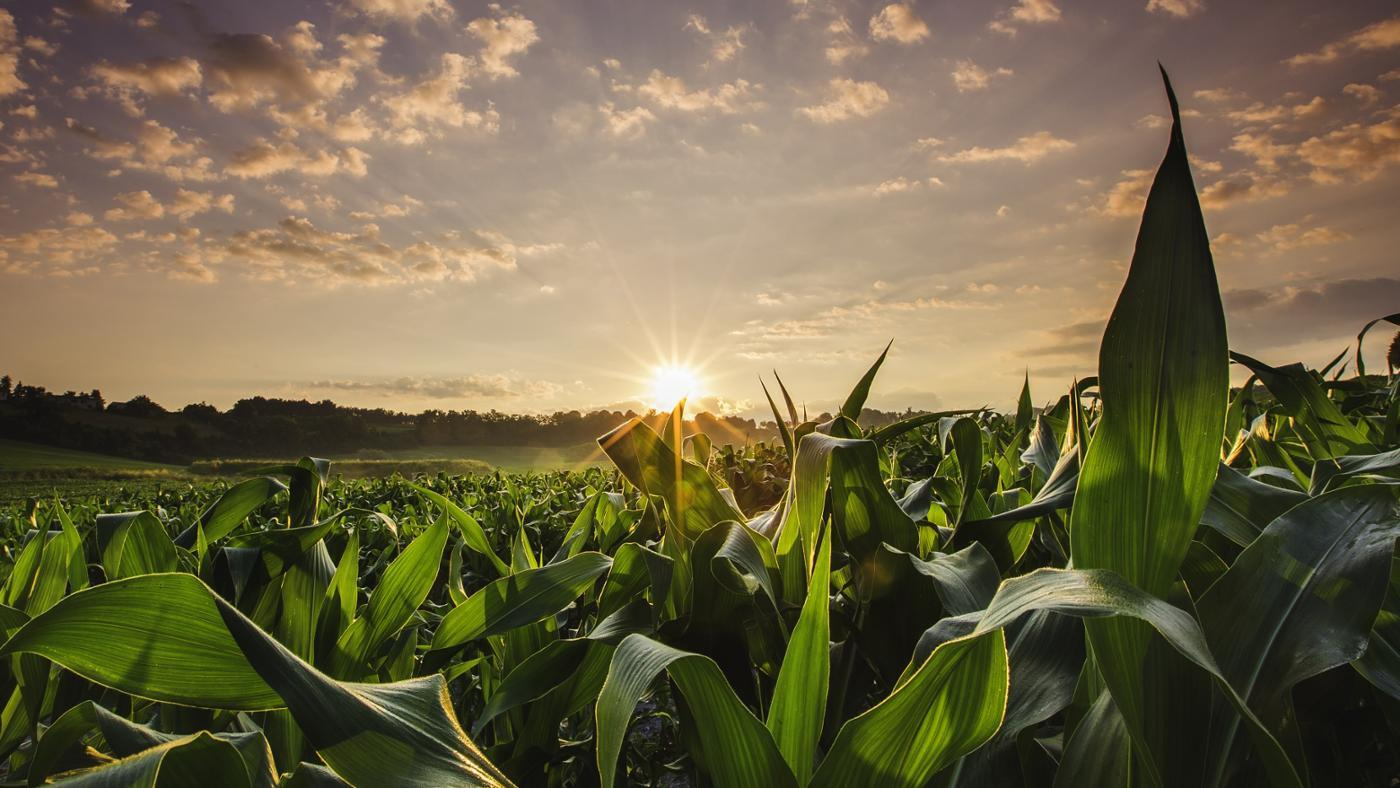 What Is Maximum Sustainable Yield?