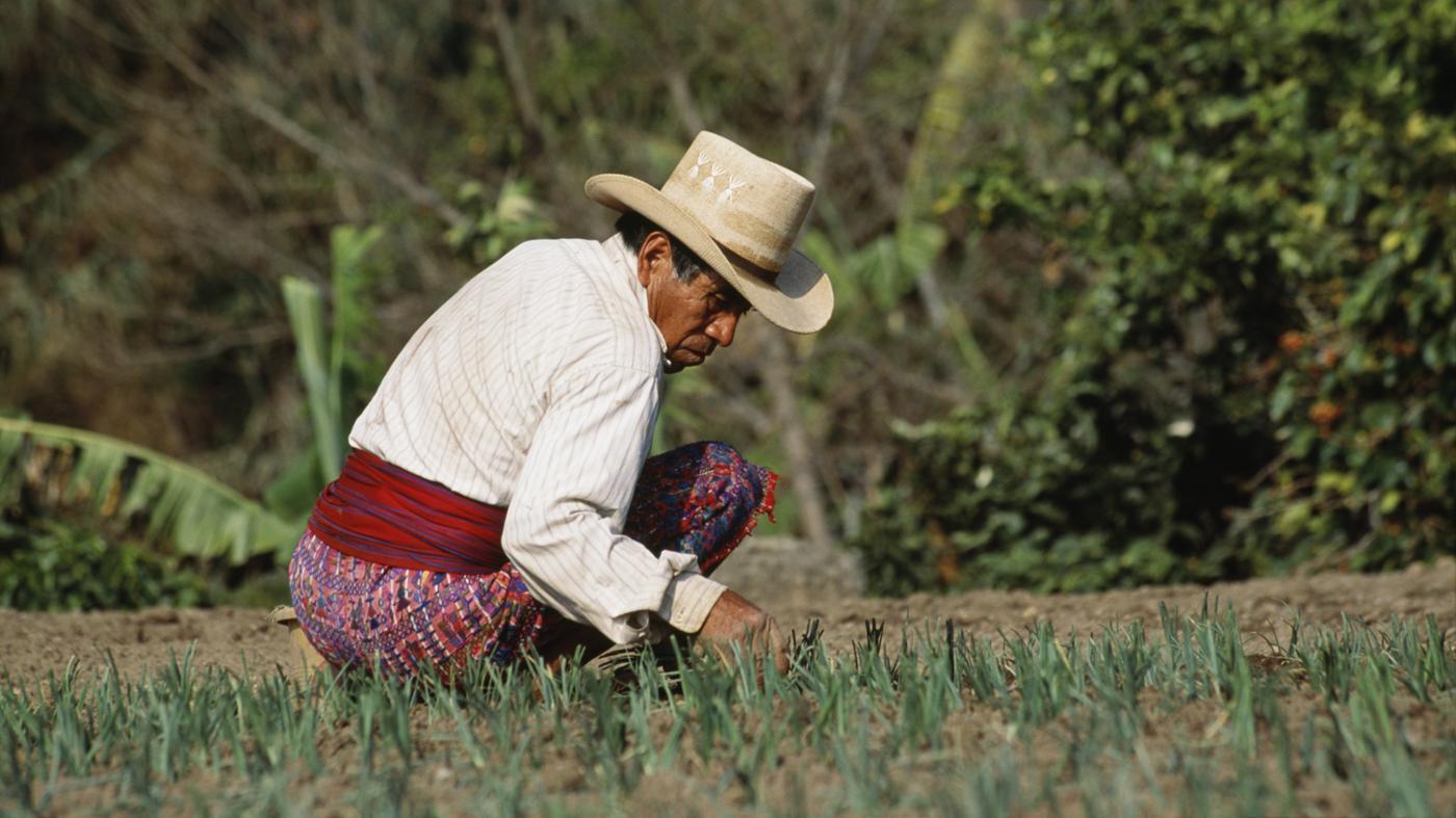 How Did the Mayan People Farm?