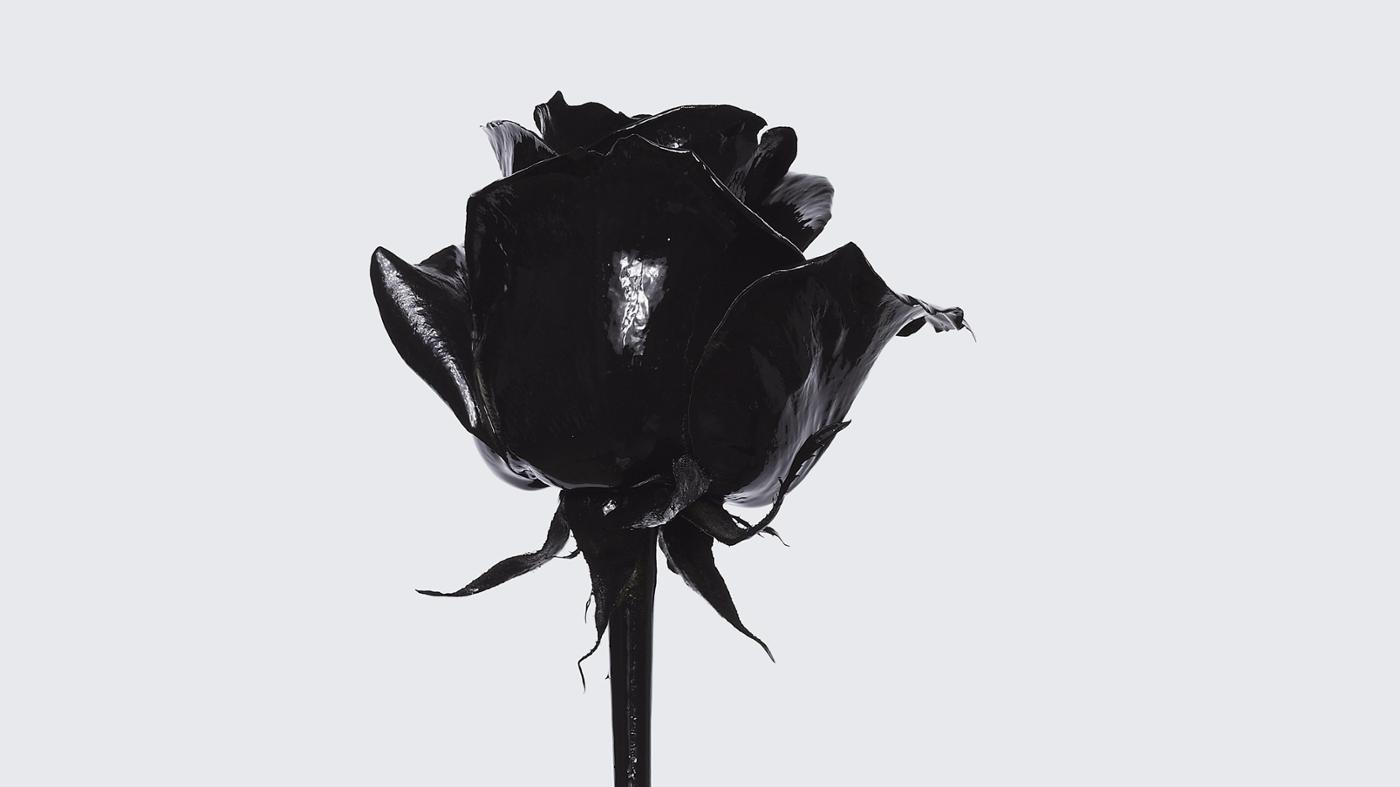What Is the Meaning of a Black Rose?
