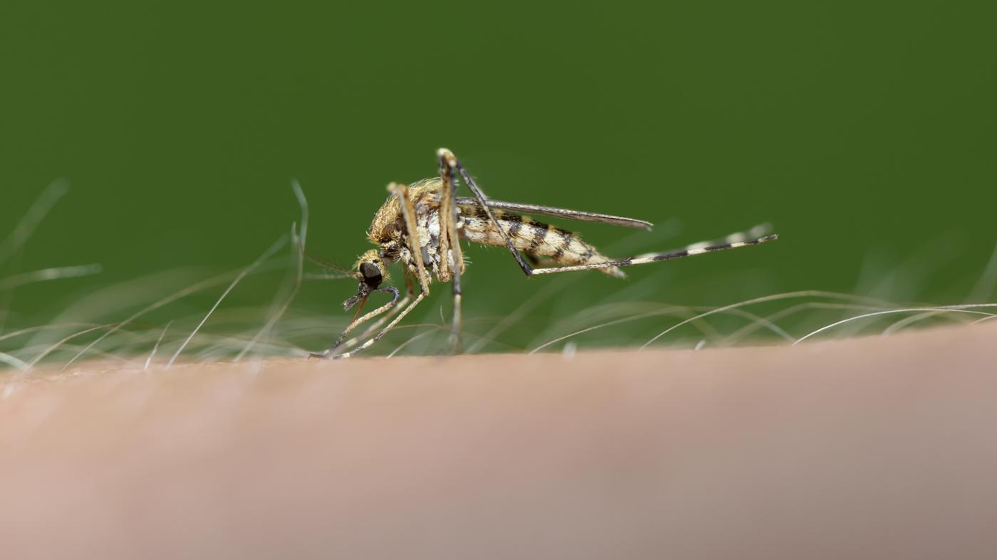 Do Mosquitoes Really Prefer Biting Some People to Others?