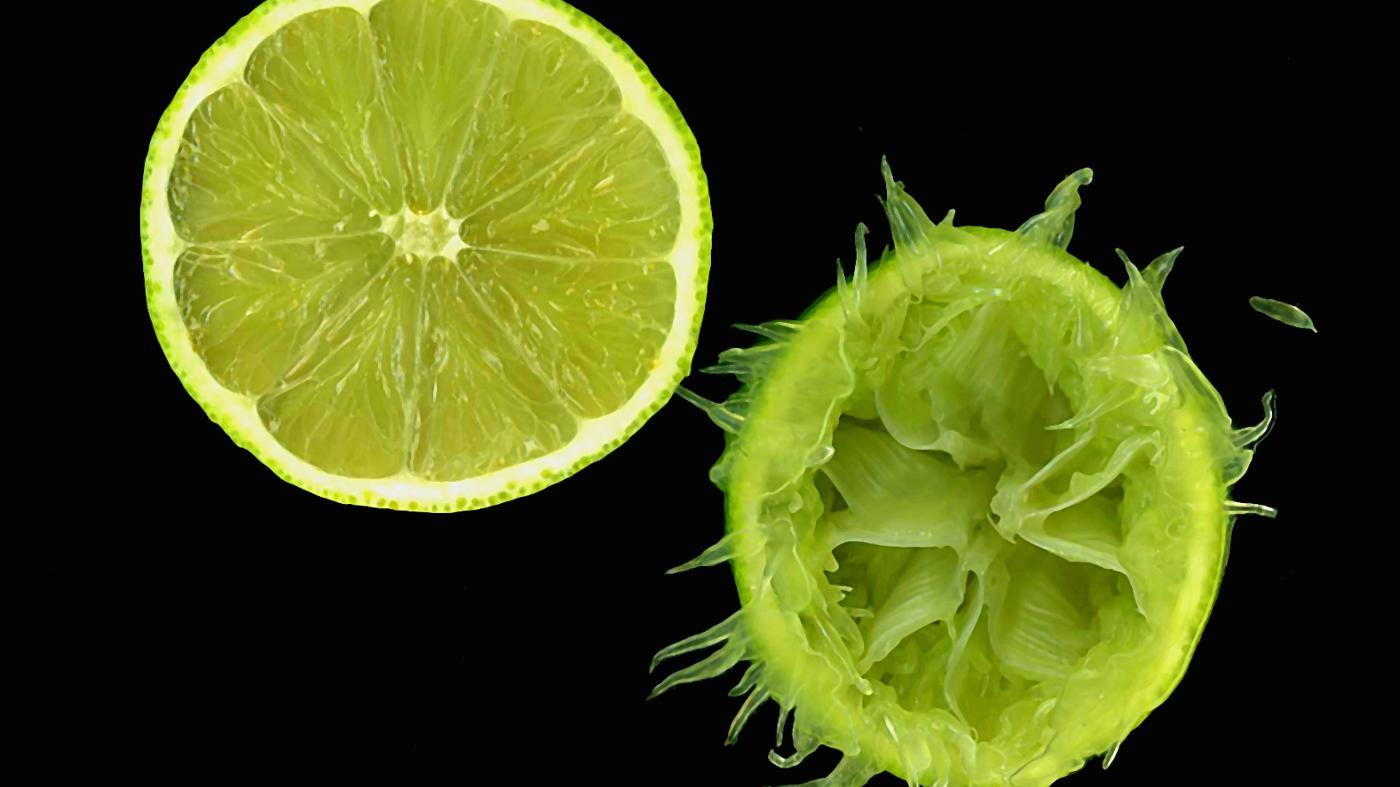 How Much Citric Acid Does a Lime Have?