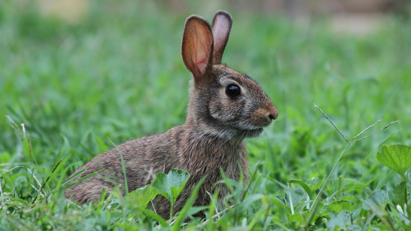 What Are the Native Animals of Italy?