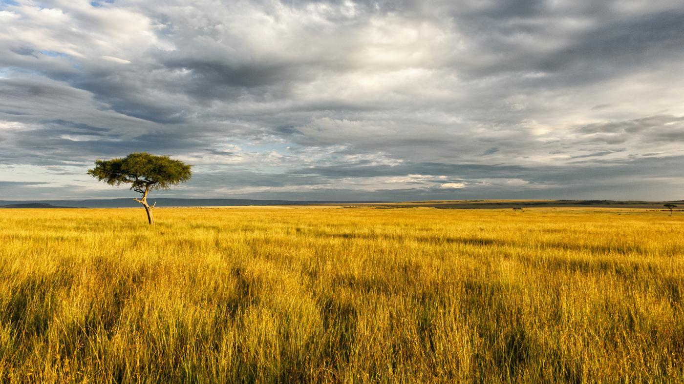 What Are the Natural Resources of the African Savanna?