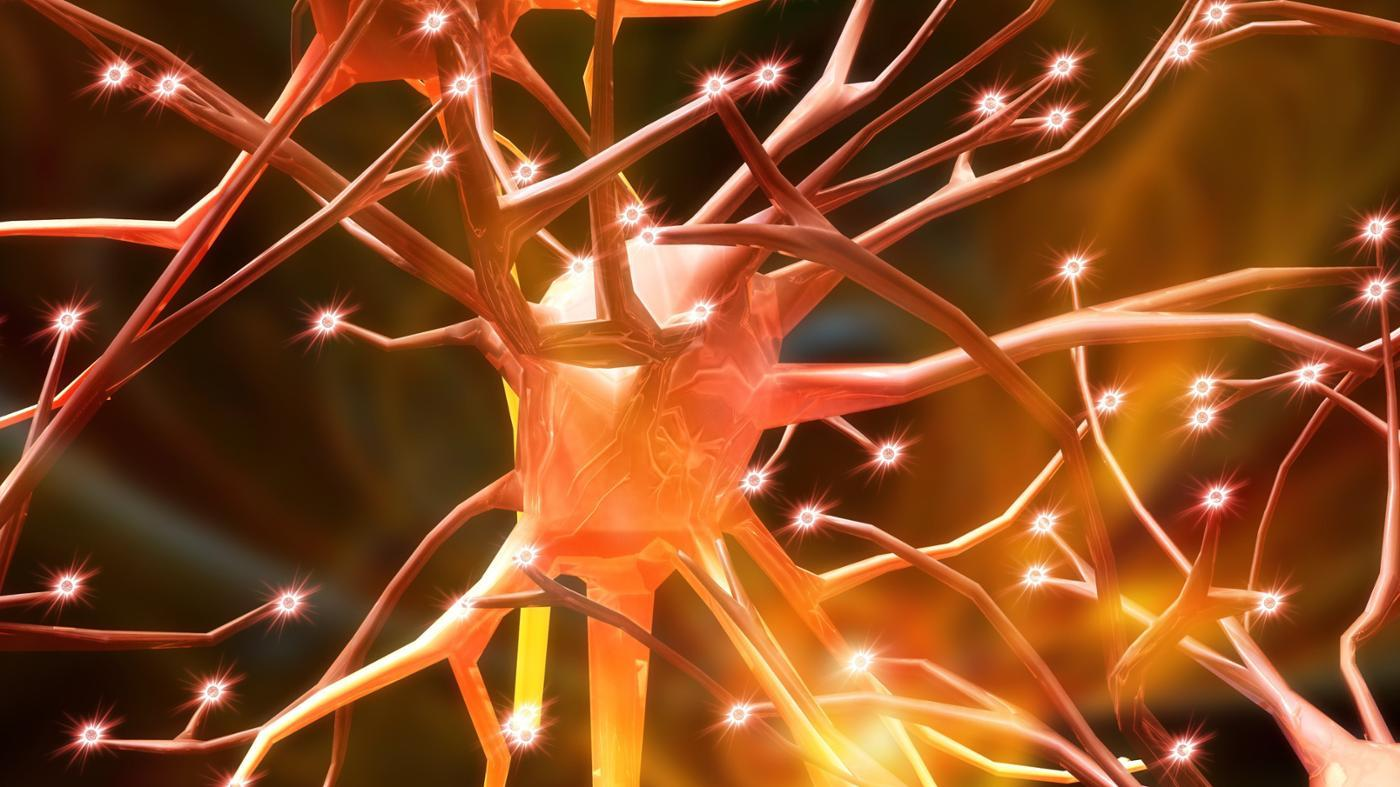What Do Nerves Do?
