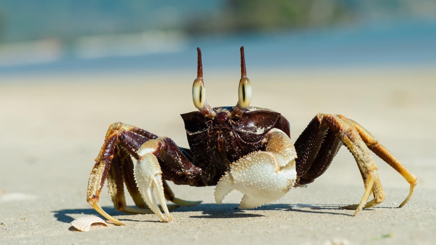 What Do Ocean Crabs Eat?