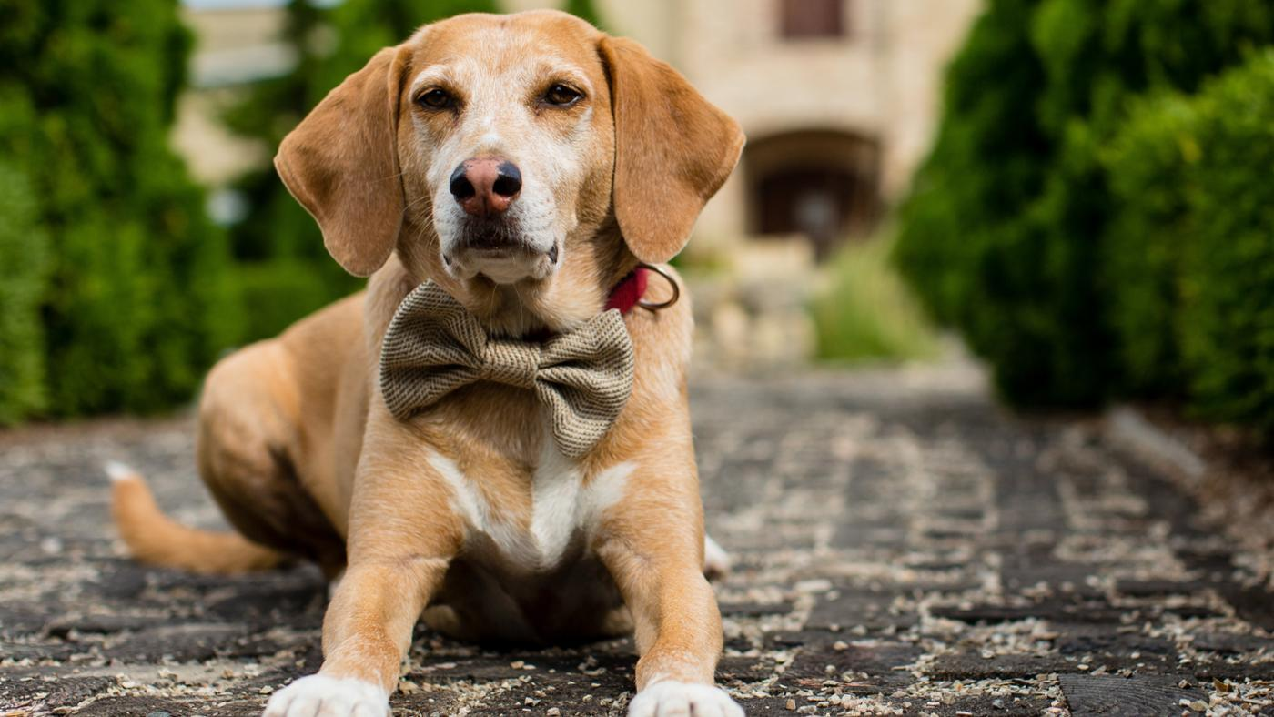 How Old Should a Dog Be When It Is Neutered?