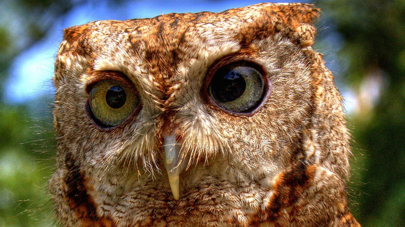 Is an Owl an Omnivore, an Herbivore or a Carnivore?