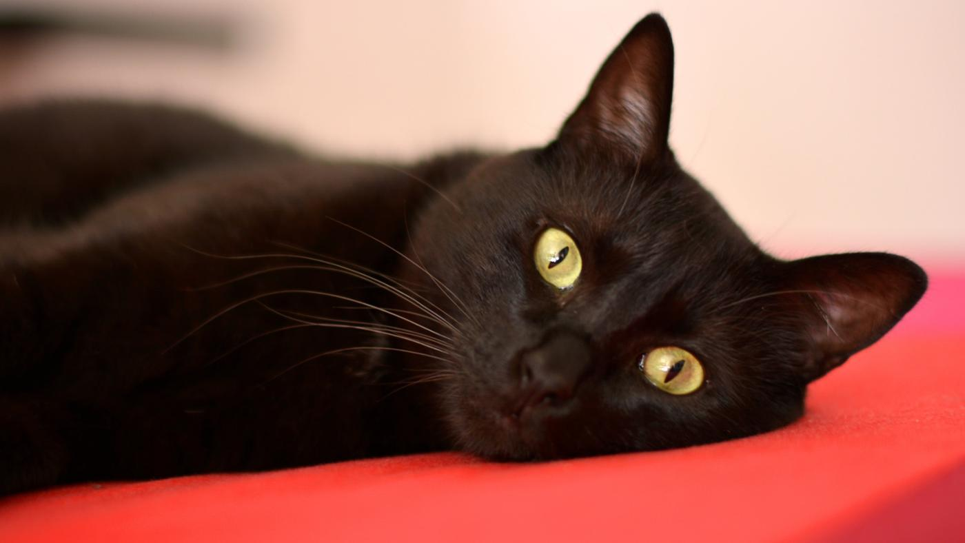 Why Are People Suspicious of Black Cats?