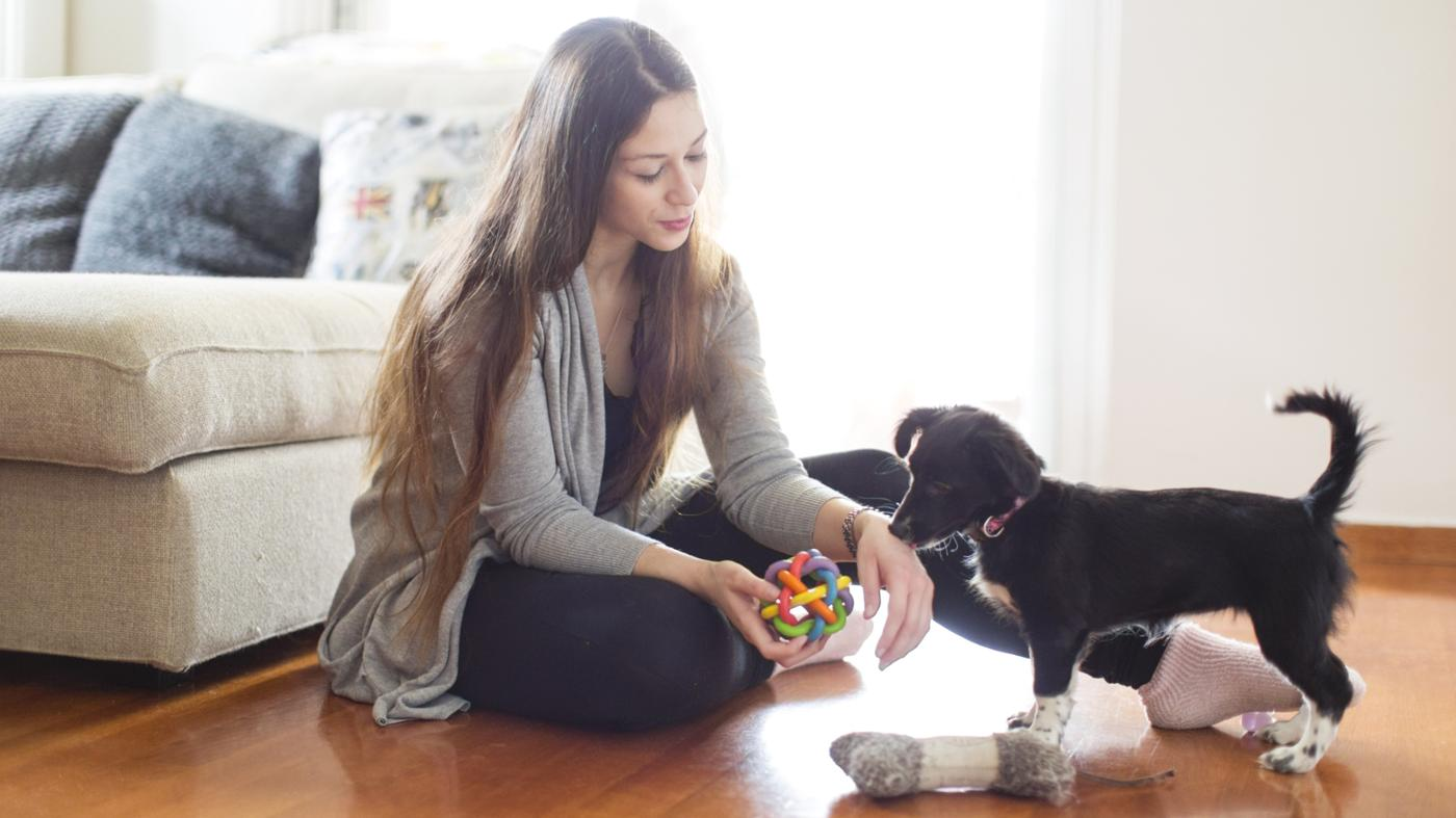 How Do You Find a Pet-Friendly Room to Rent?