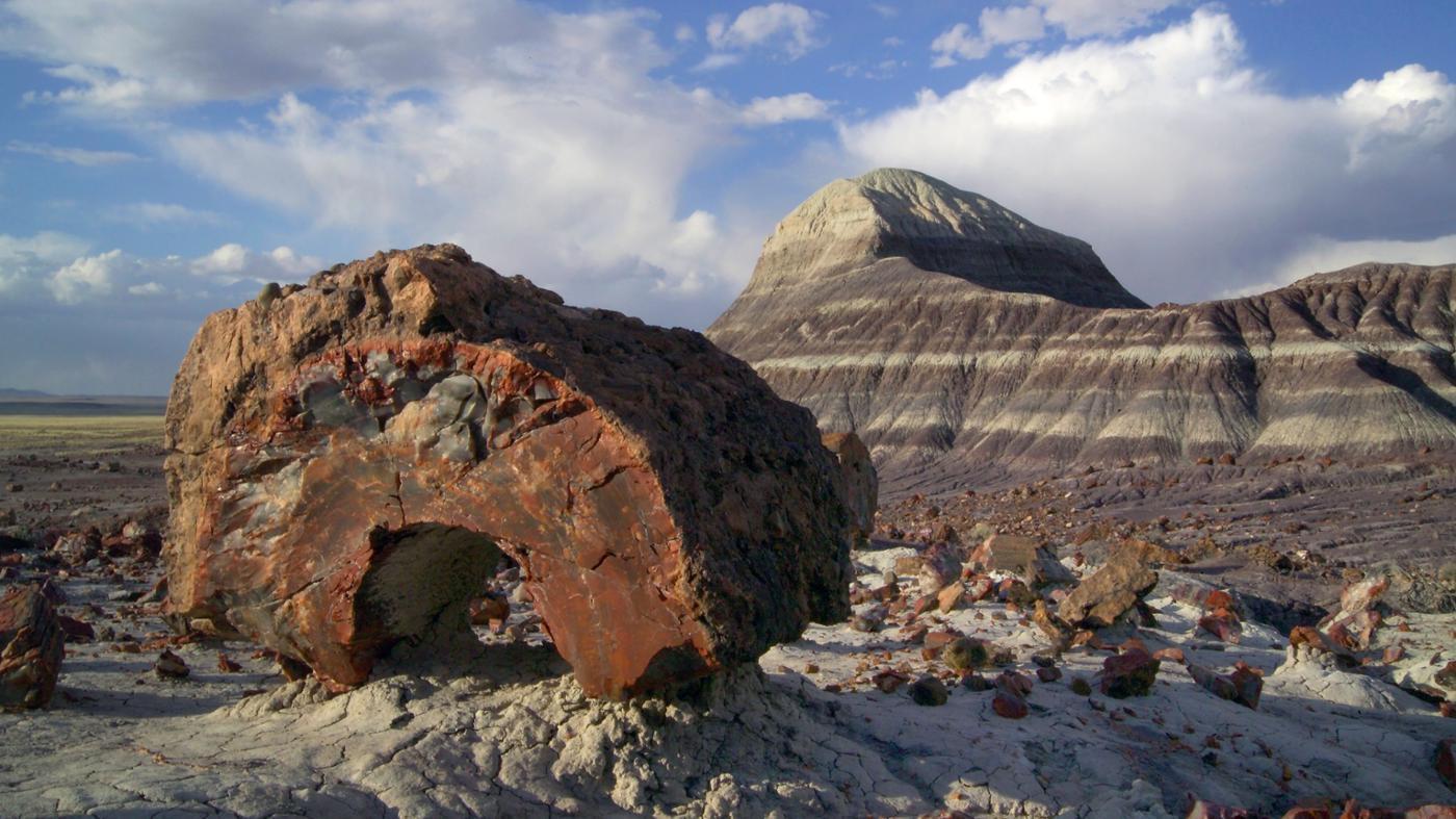 How Do Petrified Fossils Form?