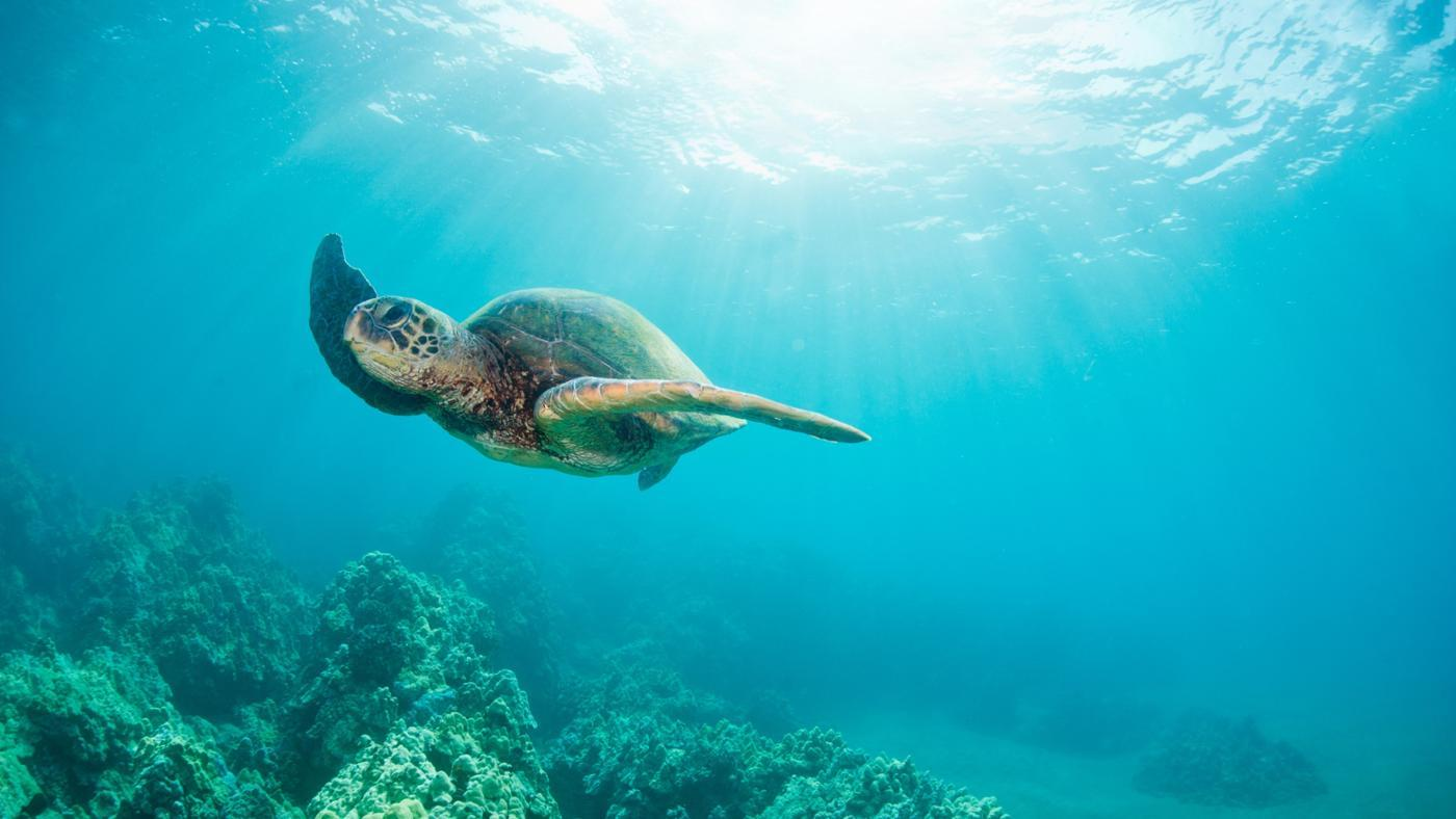 What Phobia Is the Fear of Turtles?