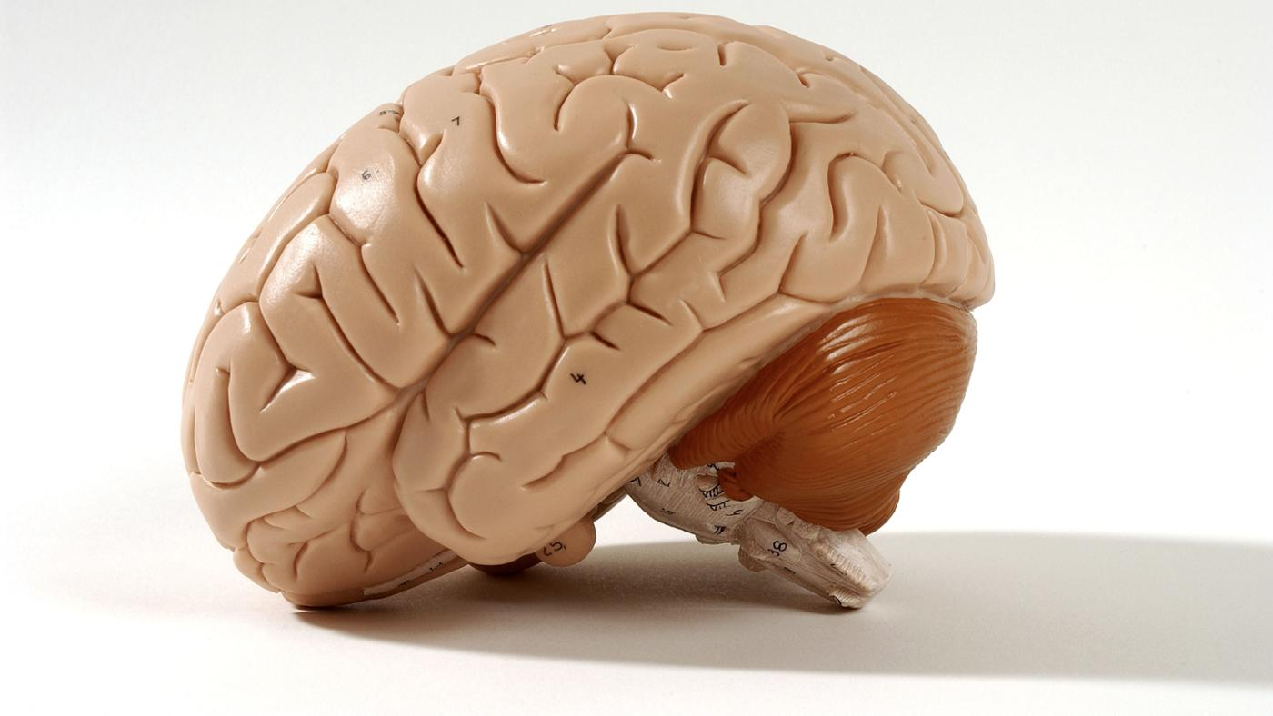 What Does the Pituitary Gland Do?