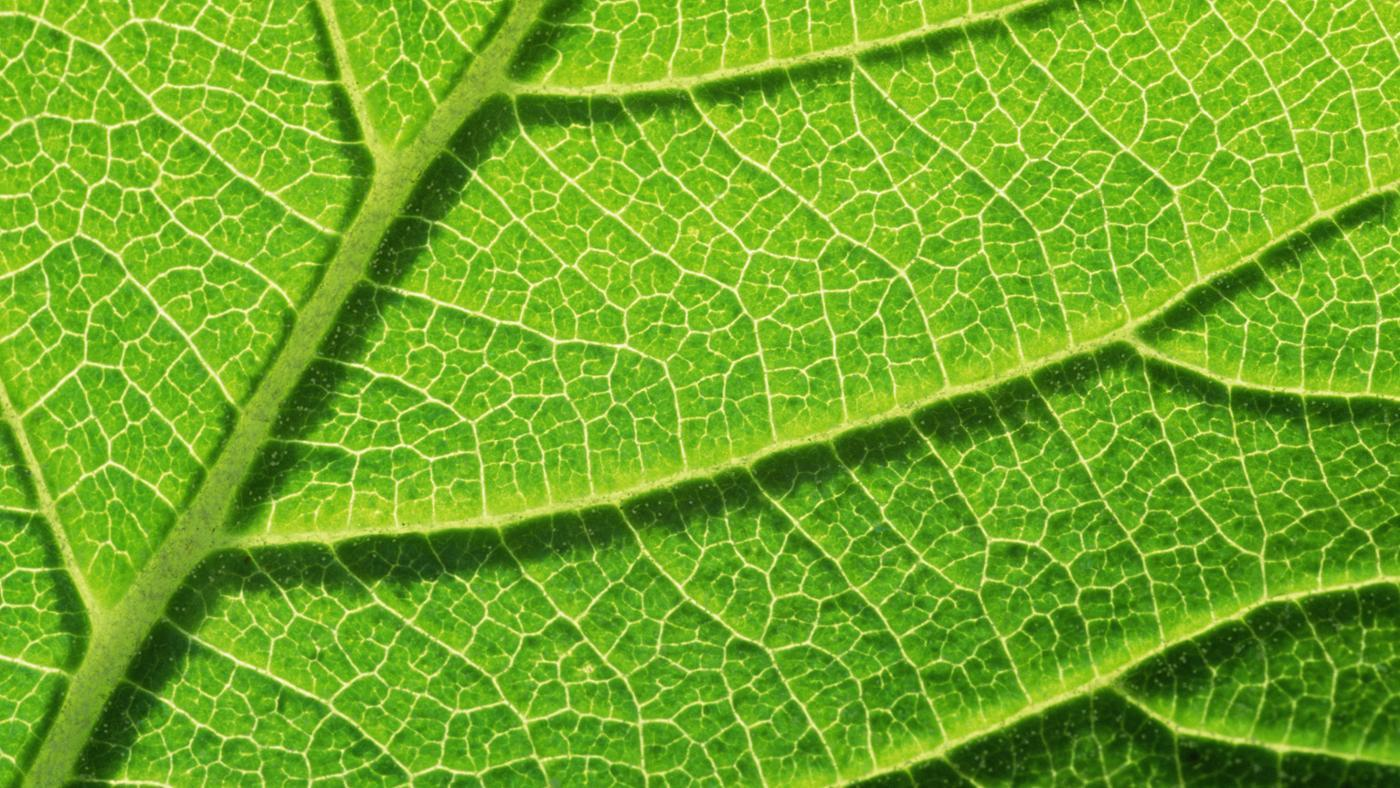 What Makes Plant and Animal Cells Different?