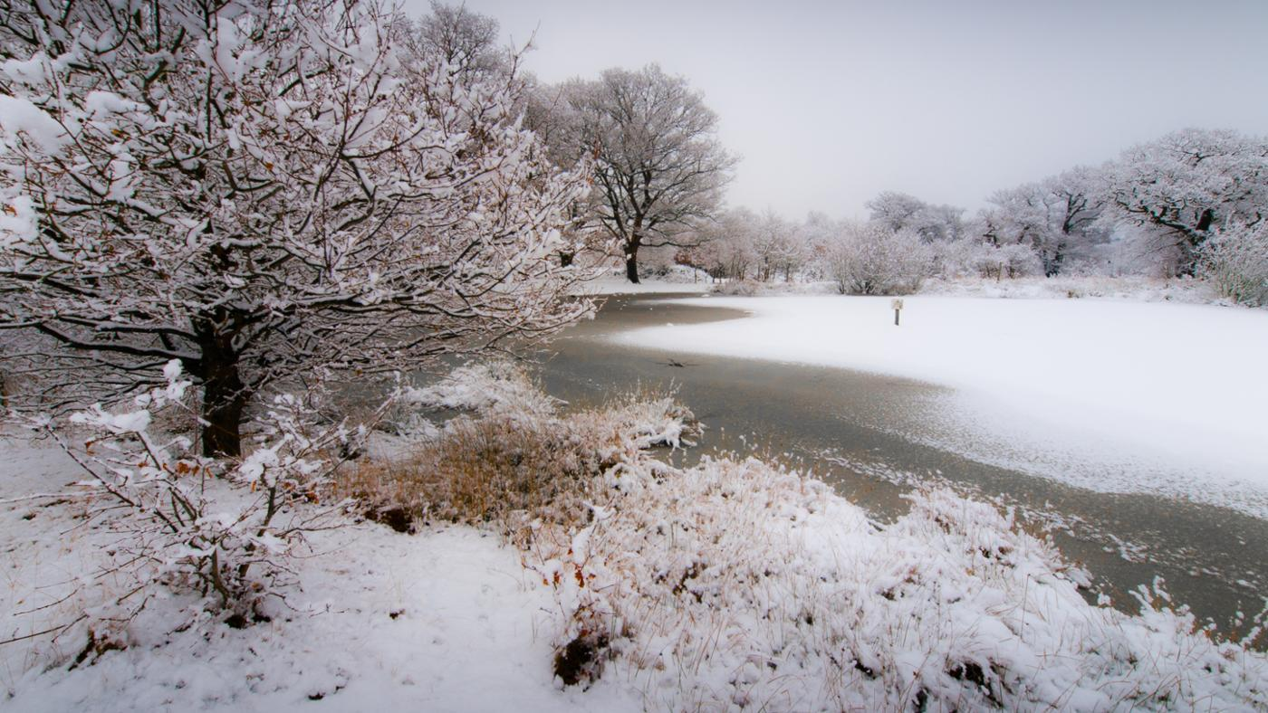 How Do Plants Adapt to Cold Weather?
