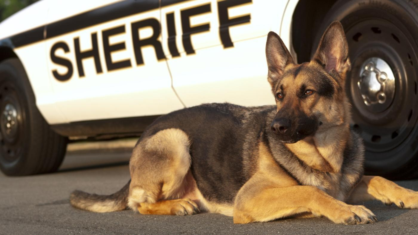 What Are Some Popular Names for Police Dogs?