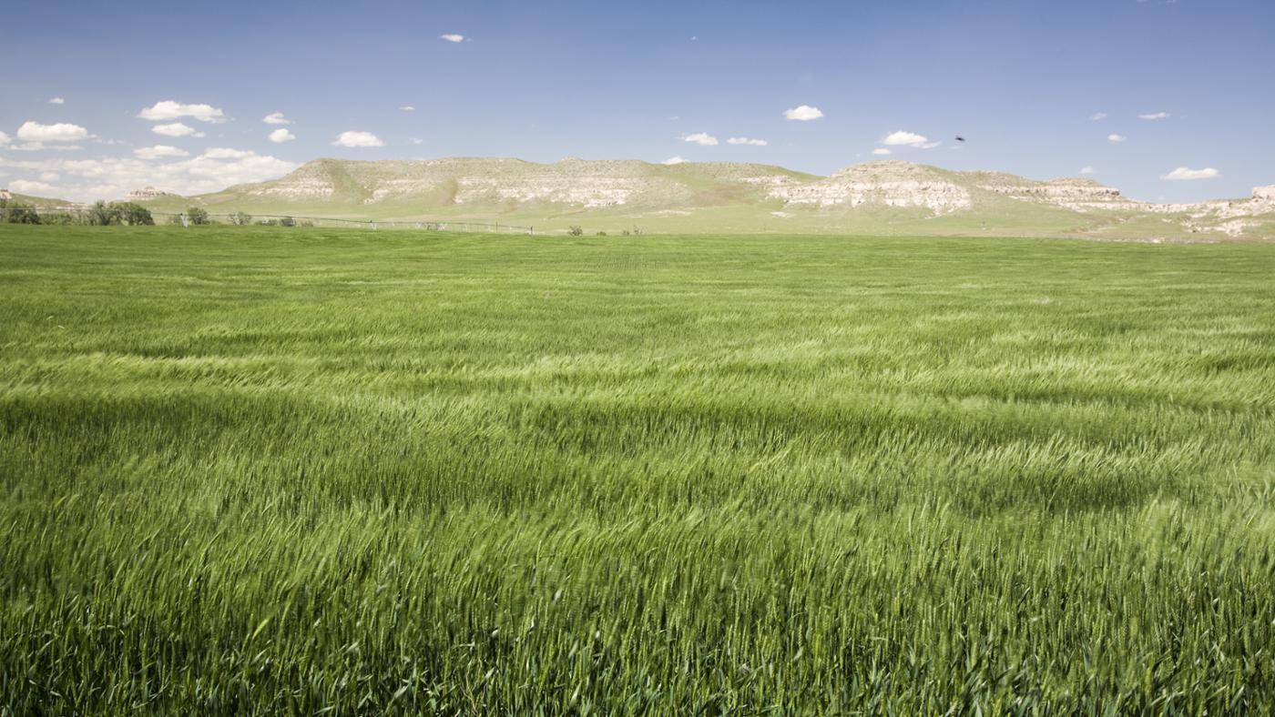 Where Are Prairies Located?