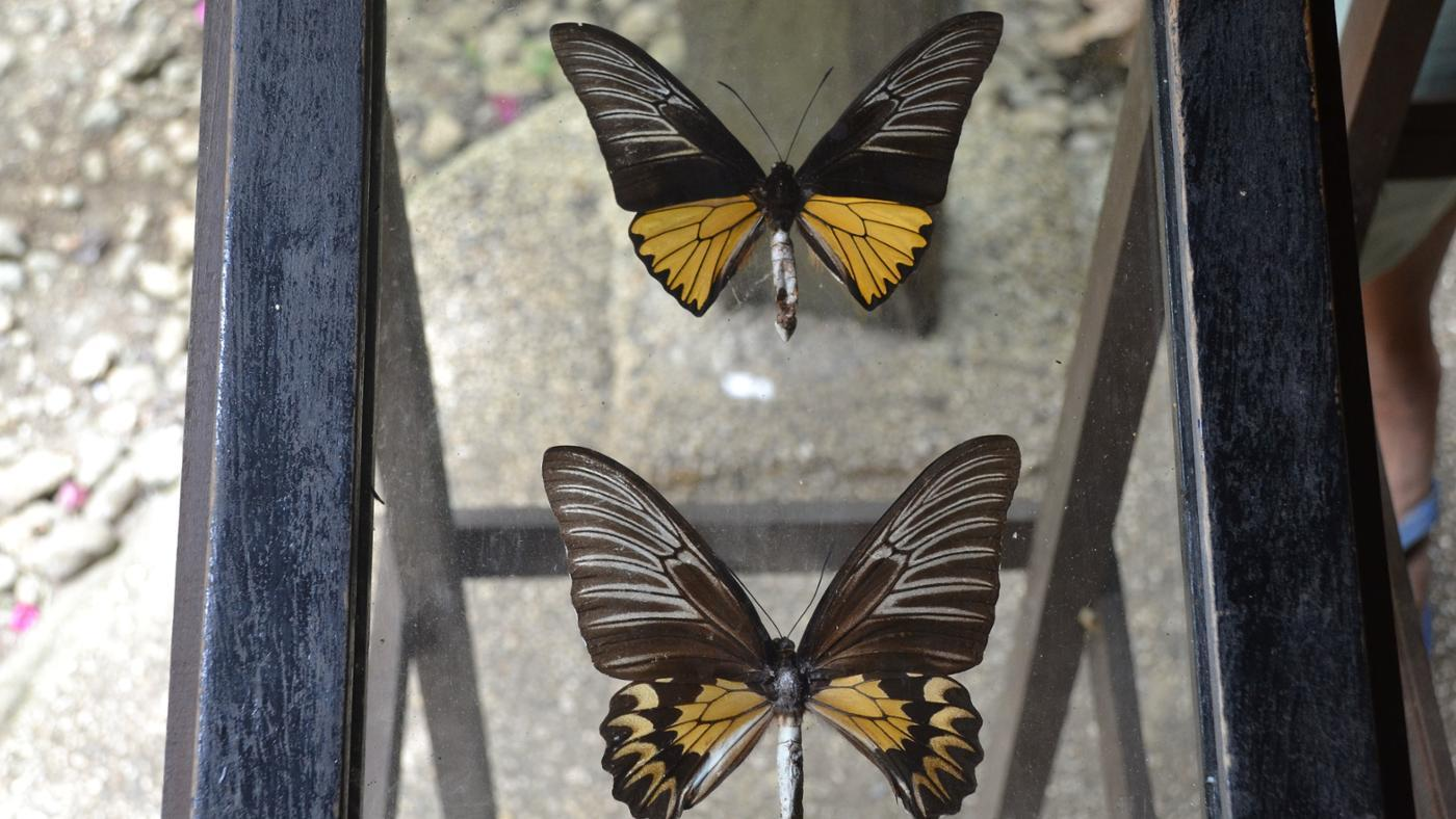 How Do You Preserve a Butterfly?