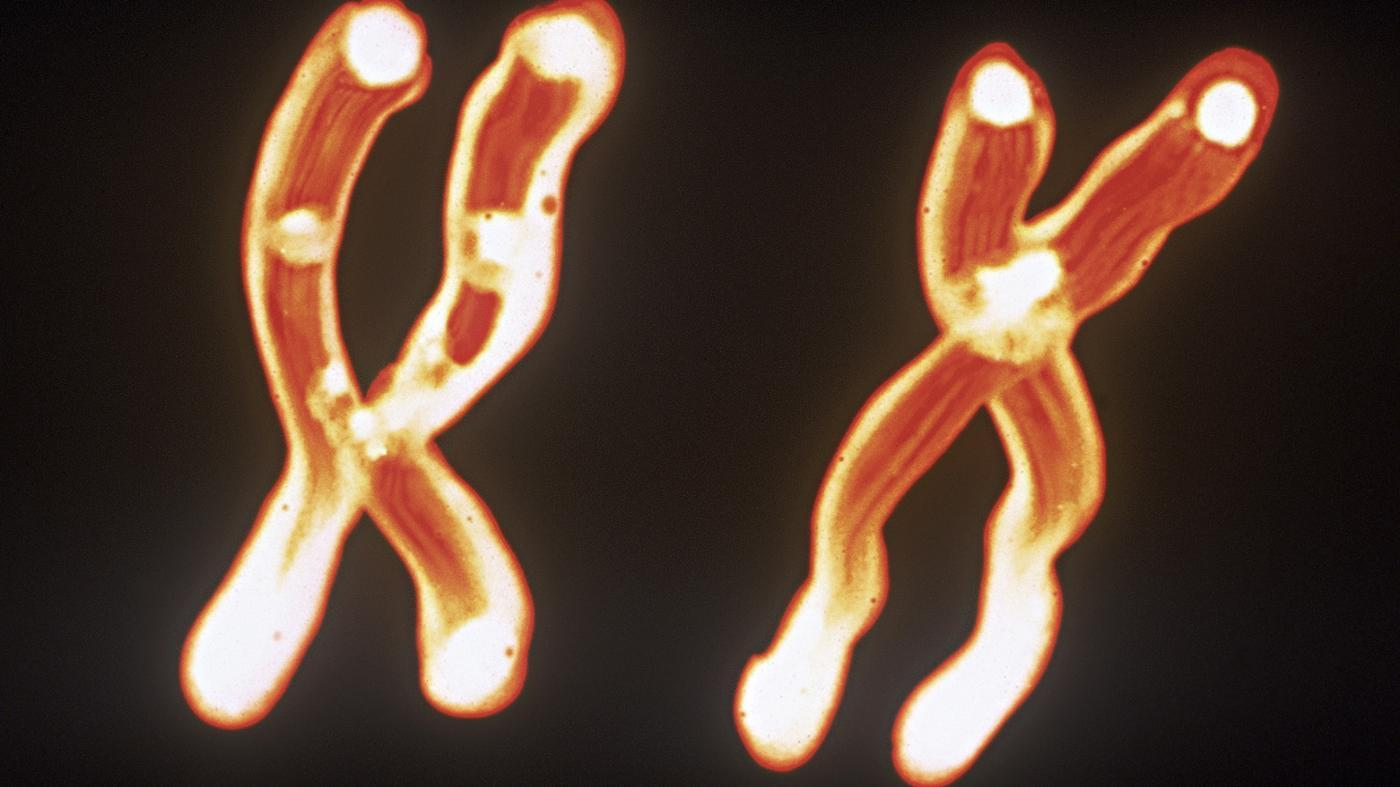 What Is the Relationship Between Chromosomes, DNA and Genes?